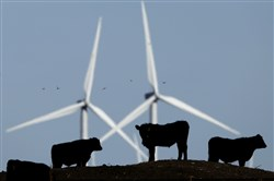 In this Dec. 9, 2015 file photo, cattle graze in a pasture against a backdrop of wind turbines which are part of the 155 turbine Smoky Hill Wind Farm near Vesper, Kan. Even if President Donald Trump withdraws U.S. support for the Paris climate change accord, domestic efforts to battle global warming will continue.