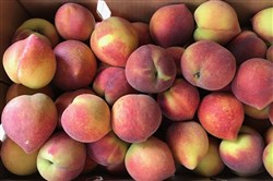 The Peach Truck sold 25-pound boxes of cling peaches Sunday at six locations in Western Pennsylvania.