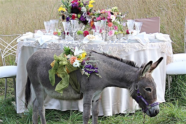 "Luther,4, is the pet miniature donkey of Destiny Hill Farm owners Nancy and Jim Cameron. ""He never misses an event at the farm and crawls under the fence to meet guests. He is our rock star,"" the Camerons said."