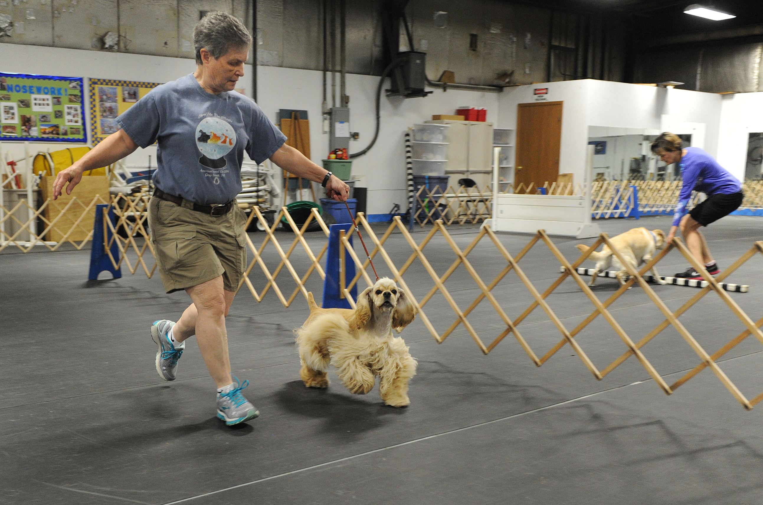 Westmoreland County Obedience Training Club Linda Honspeterger of Penn Hills trains with Cocker Spaniel Karma at the Westmoreland County Obedience Training Club in Delmont.