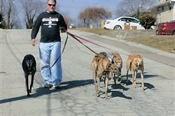 Ed Steckel walks his greyhounds in Shaler.
