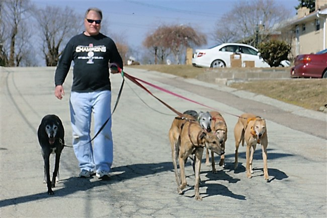 Ed Steckel with greyhounds Star, left, Dug, Johnnie, Queenie and Dani.