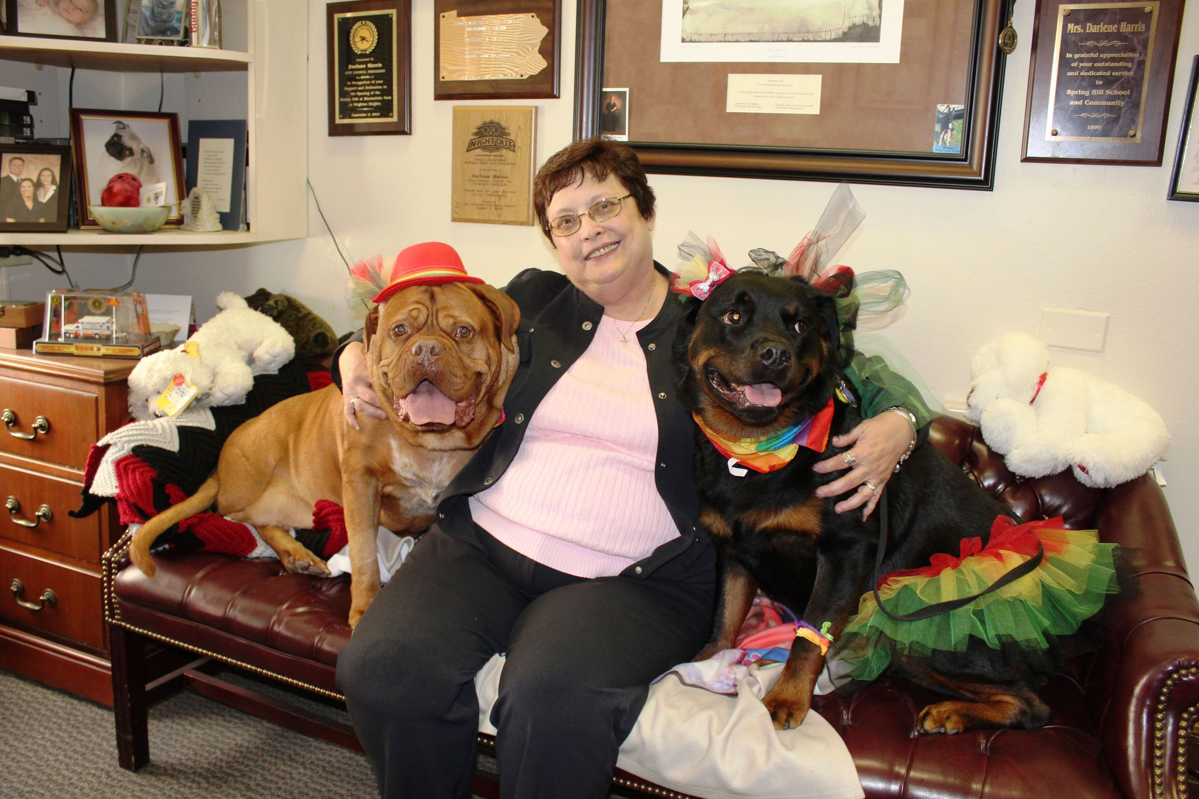 darlene harris with the dogs of dogday0701 Pittsburgh City Councilwoman Darlene Harris sponsored the resolution honoring Sebastian, left, a dogue de Bordeaux, and Arianna, a Rottweiler, for their therapy work with Three Rivers Hospice and Family Home Health Services, Inc.