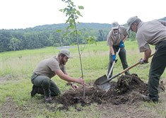 Jason Parsons, left,  of Citizen Conservation Corps, Andrew Moorehead, 17, and Dale Detrick, 19, plant a Basswood tree as part of the geothermal energy system installation at the Fort Necessity National Battlefield in Farmington on July 13. The national park is switching to geothermal energy system.