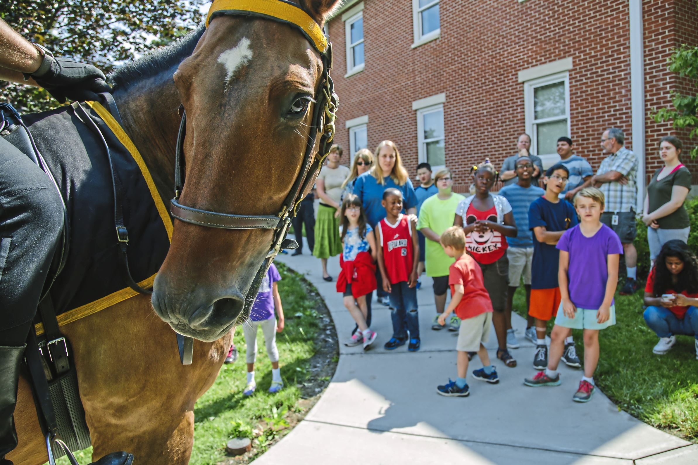 20170711arHorseAcademy03-2 Milo, ridden by Officer Christopher Swanson of the Allegheny County Police Mounted Unit, visits the Western Pennsylvania School for the Deaf in Edgewood during this week's Junior Police Academy activities.