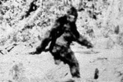 The Keystone Bigfoot Project, a Bigfoot sighting database, has recorded 43 reports of the creature in Allegheny County.