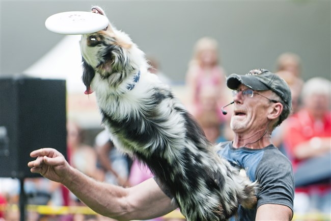 Cosmo and trainer Tad Bowen of Erie perform with the Muttley Crew Flying Dogs at the 2015 Three Rivers Regatta. Frisbee dogs will be part of this year's event, too.