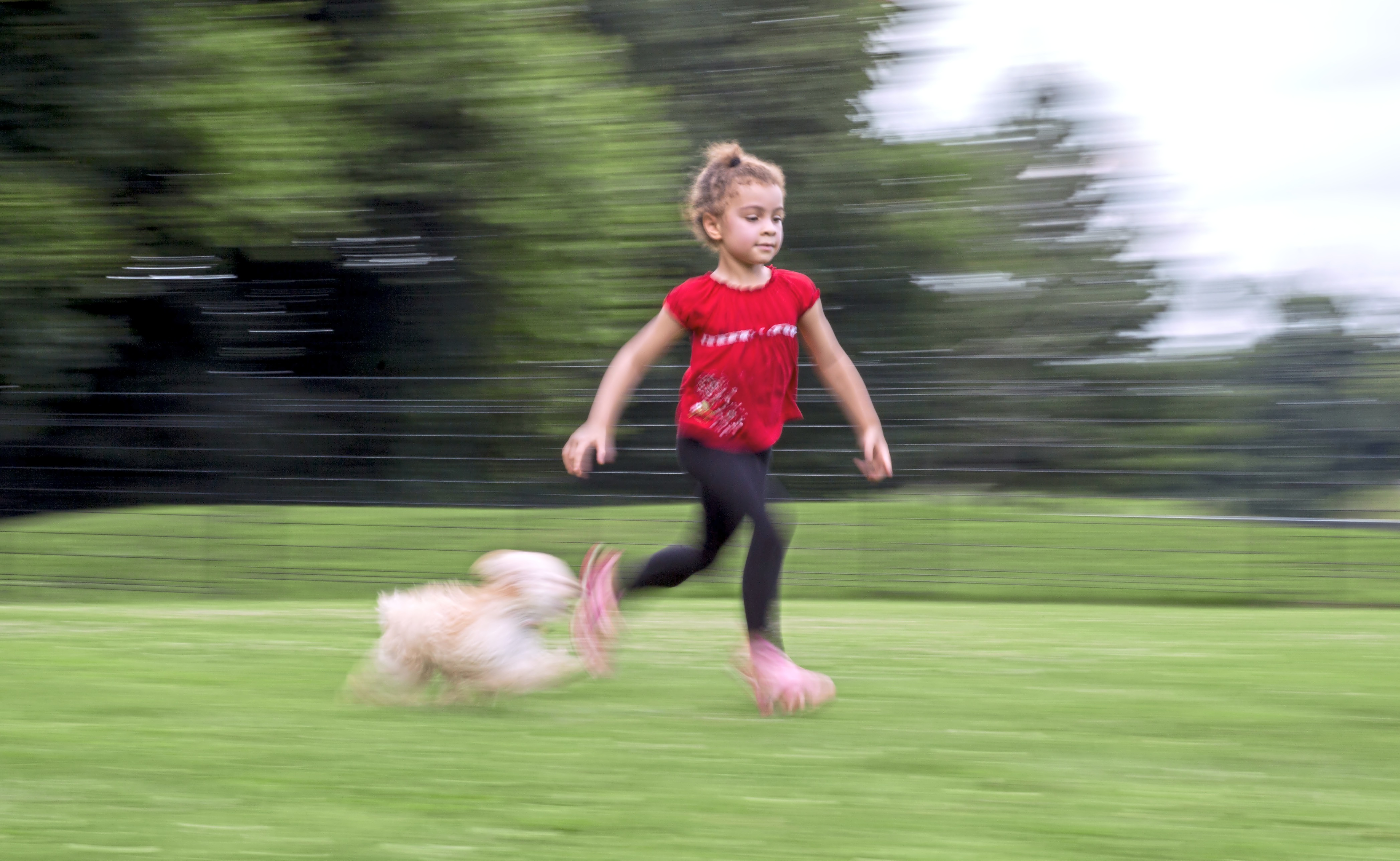 20170802acFeature03-2 Amaria Brown, 4, of Highland Park races against her dog, Bitsy, at the Highland Park Dog Park.