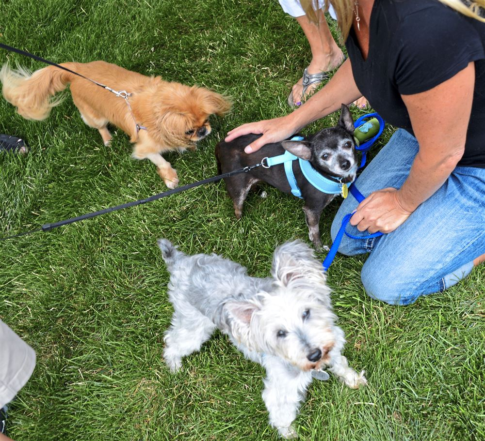 Dog Rescue Groups In Pittsburgh