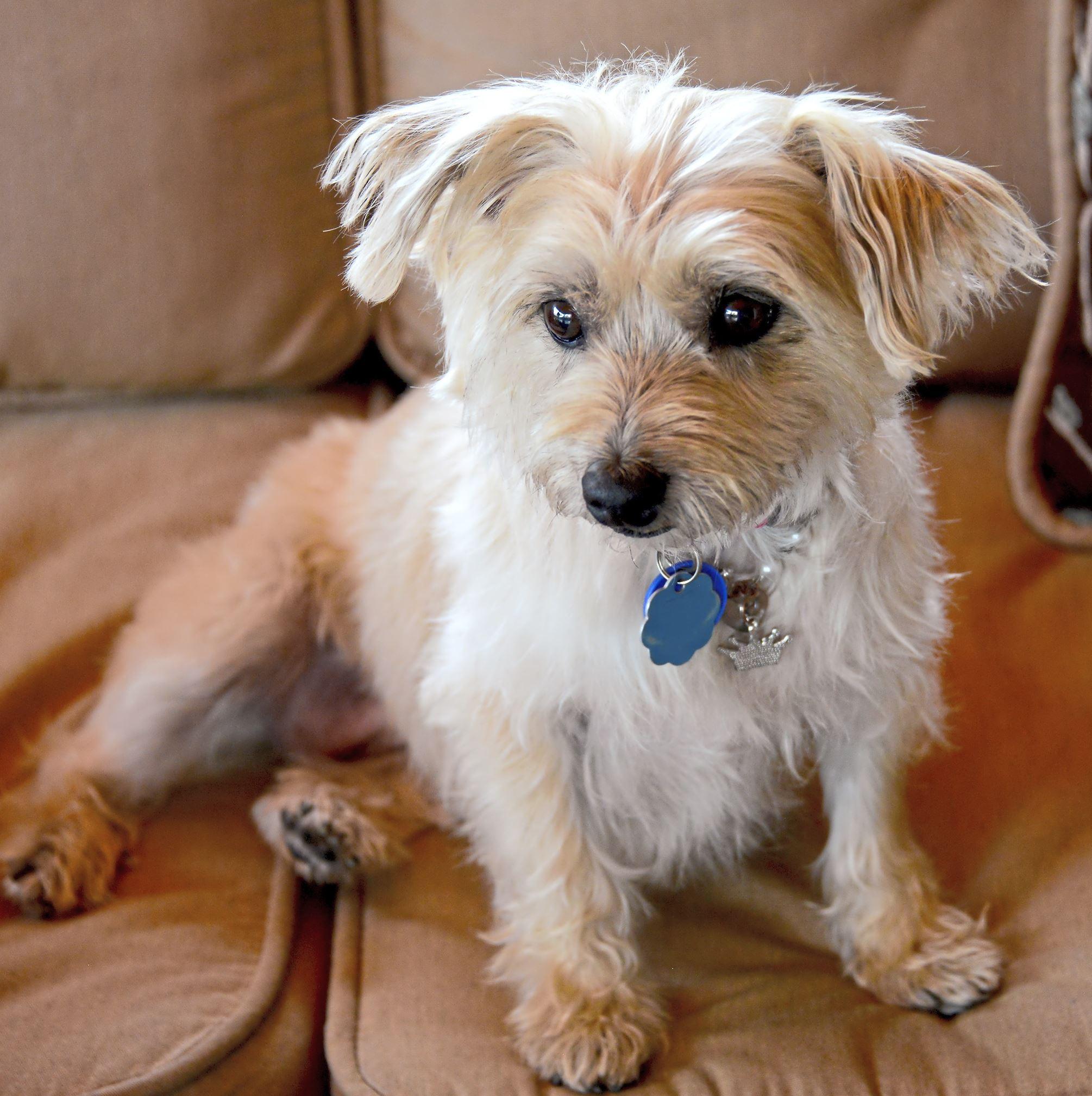 Senior Dog Adoption Pittsburgh
