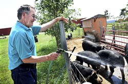 In this July 28 file photo, Byron Anderson smiles as he watches his hot pigs enjoy a spray of cold water on his farm in Hugo, Minn.