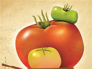 All that rain has slowed the tomato season some.