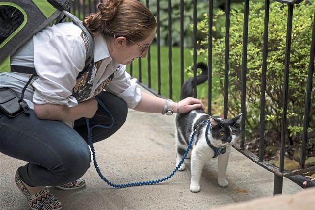Ariel Kornhauser of Squirrel Hill and her cat, Frisky Lincoln, organize First Caturdays at Schenley Park in Oakland.
