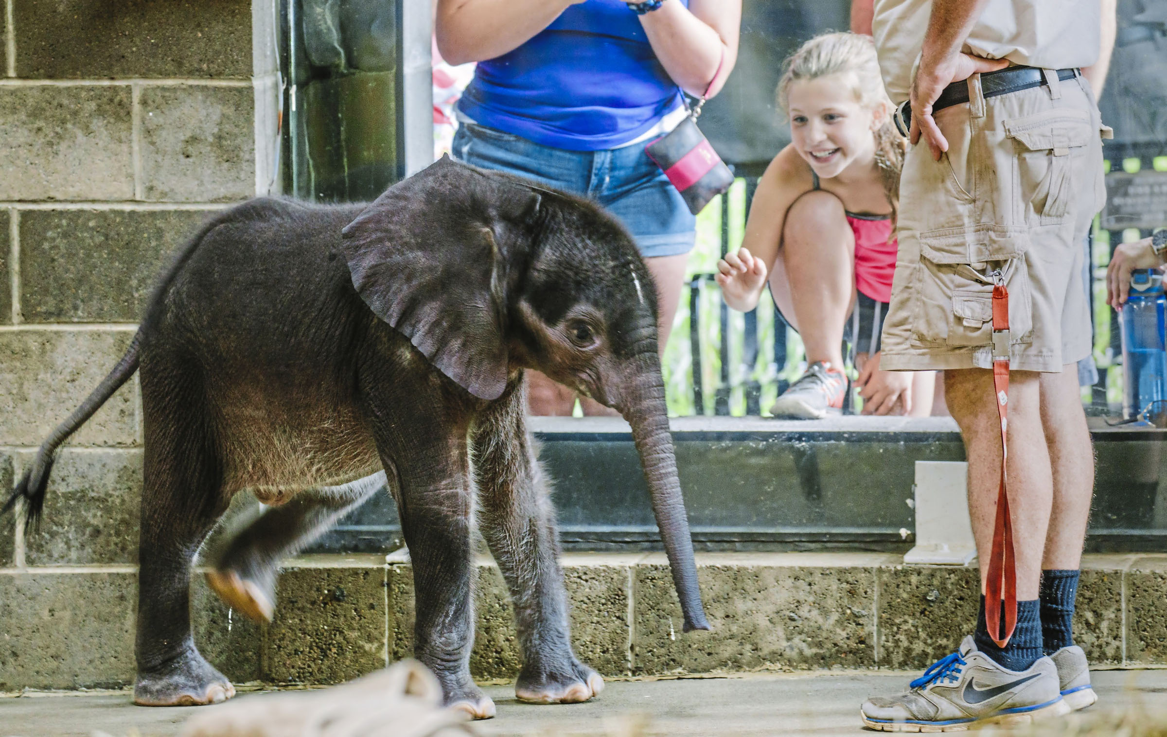 PAPIT104 BABY ELEPHANT DIES-6 The Pittsburgh Zoo's 4-week-old baby elephant meets the public for the first time at the elephant family room windows in Highland Park on July 7, 2017. The elephant died Aug. 30.