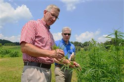 "Agriculture Secretary Russell Redding examining hemp plants with William ""Bill"" Evans, chief of staff for State Sen. Judy Schwank, at the Rodale Institute outside Kutztown, Berks County, in mid-July."