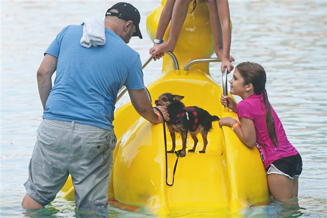 Vinny DeBacco, left, of Dormont, tries to coax his half-Chihuahua, half-Yorkie down the slide during the Dormont Doggie Dip at Dormont Pool on Monday.