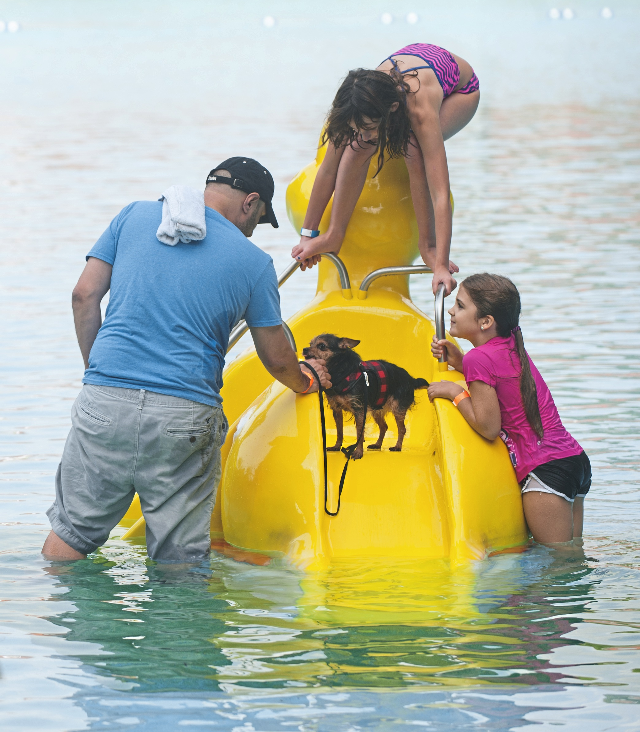 20170904smsWetDogs02-1 Vinny DeBacco, left, of Dormont, tries to coax his half-Chihuahua, half-Yorkie down the slide during the Dormont Doggie Dip at Dormont Pool on Monday.