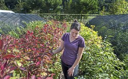 Nursery manager Megan Palomo inspects her plants on Sept 13 at Tree Pittsburgh Heritage Nursery in Lawrenceville.