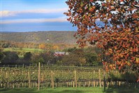 Loudoun County's Sunset Hills Vineyard is alive with color in fall.