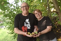 Edward and Alma Fincke hold pawpaws from trees by their Emsworth home. The couple planted pawpaw trees in 1988.