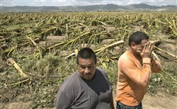 "Jose A. Rivera, right, and his brother Jose Ramon Rivera look over their destroyed plantain crops in Yabucoa, Puerto Rico, Sept. 24. In a matter of hours, Hurricane Maria wiped out about 80 percent of the crop value in Puerto Rico, making it one of the costliest storms to hit the island's agriculture industry. ""There is no more agriculture in Puerto Rico,"" Jose A. Rivera said. ""And there won't be any for a year or longer."""