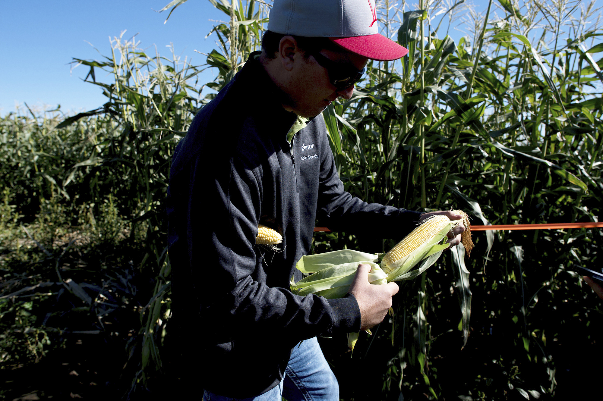 Producer Prices FILE - In a Tuesday, Oct. 3, 2017, file photo, Kevin Moe, a Syngenta seed representative, holds an ear of sweet corn at one of the company's test sites near Pasco, Wash. On Thursday, Oct. 12, 2017, the Labor Department reports on U.S. producer price inflation in September. (Tyler Tjomsland/The Spokesman-Review via AP, File)
