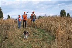 Pheasant propagation has gotten pricey, and a new way to pay for it debuts this season