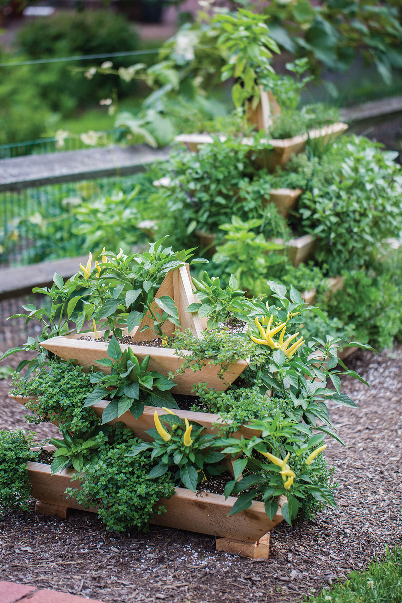 Brian And Barb Dunn, Winners Of The PGu0027s Great Gardens Contest, Pack Lots  Of Vegetables Into Their Burpee Plant Pyramid ($260 For Five Tiers/$150  Three ...