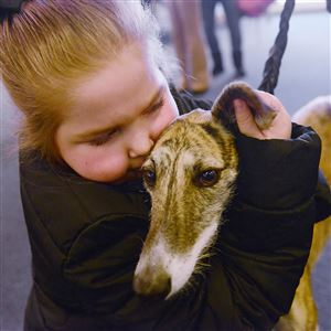 Kyree Beachem, 10, of Ellwood City hugs a rescued greyhound who visits patients at the hospital Monday, November 20, 2017, at Children's Hospital of Pittsburgh of UPMC in Lawrenceville.