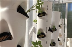 These are grow towers, part of University of Pittsburgh's Aquaponics Project. The project just won first place, $35,000 and a Ford Van to advance its ability to produce five tons of basil and fish in a 20-foot-by-8-foot shipping container.