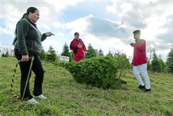After spending two hours looking for just the right tree, Tammy Alred, left, Angelo Buti, center, and Rondell Alred get ready to take their tree back to the barn to be shaken and baled by employees of Candle Tree Farm.