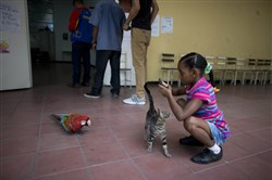 A girl takes pictures of a macaw that flew inside a polling station during mayoral elections in Caracas, Venezuela, on Dec. 10, 2017.