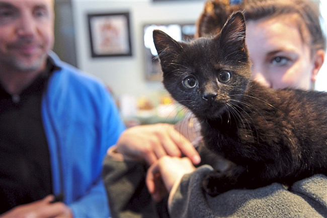 Piper Reck, 14, and her father Howard Reck look on as their 9-week-old kitten poses for the camera Monday, Dec. 25, 2017, at their home in Squirrel Hill.