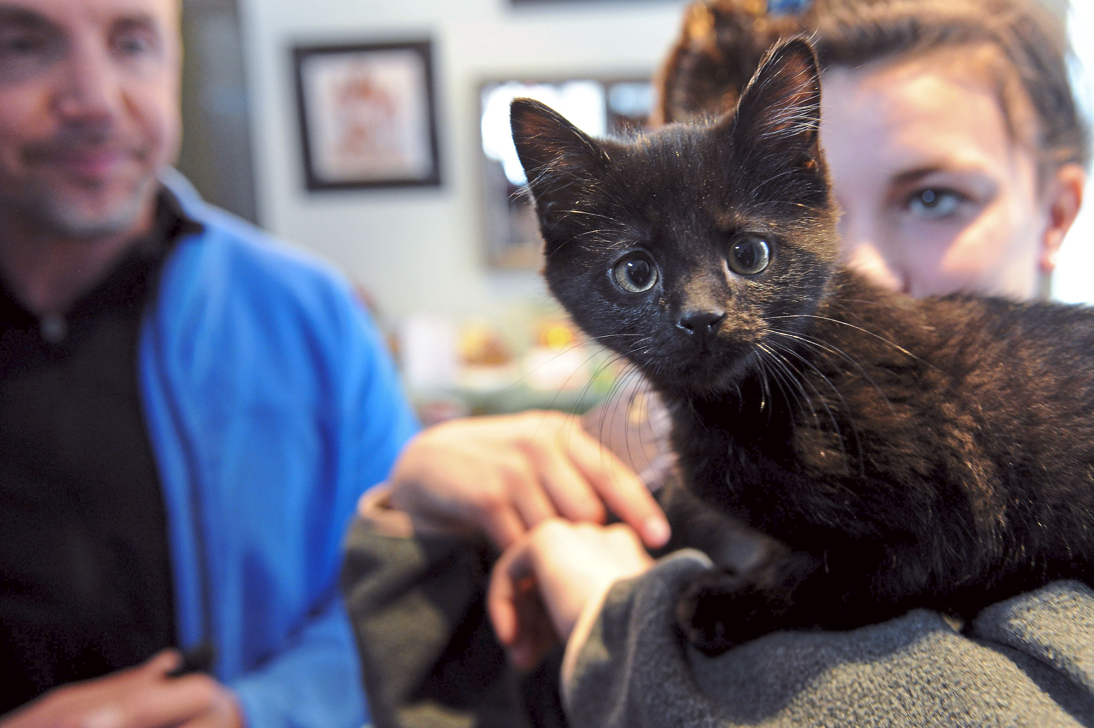 20171225ng-Kitten1 Piper Reck, 14, and her father Howard Reck look on as their 9-week-old kitten poses for the camera Monday, Dec. 25, 2017, at their home in Squirrel Hill.