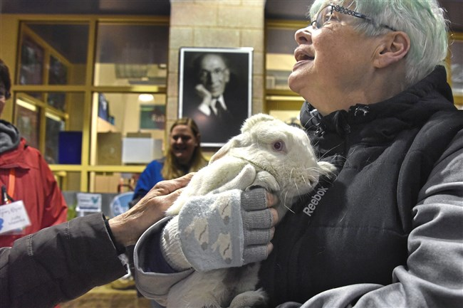 """Trish Gainey, of Avalon and a volunteer at Animal Friends, holds """"Cheese Cake,"""" one of 6 rabbits that were brought from the Erie Area Rabbit Society or """"E.A.R.S."""""""