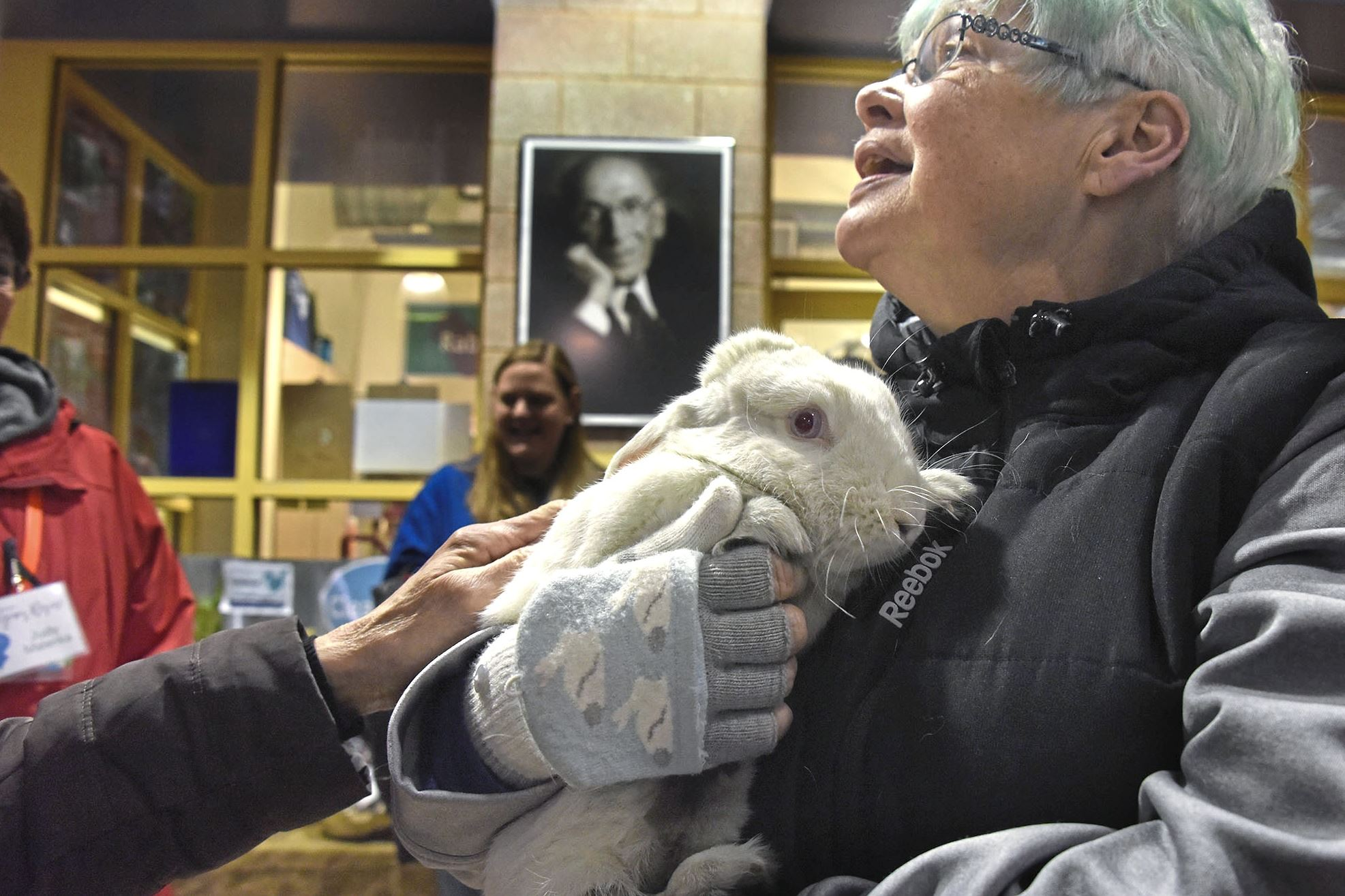 "20171229dsNewYearRescueLocal01 Trish Gainey, of Avalon and a volunteer at Animal Friends, holds ""Cheese Cake,"" one of 6 rabbits that were brought from the Erie Area Rabbit Society or ""E.A.R.S."""