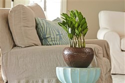 Zamioculcas zamiifolia, also known as ZZ plant, is a houseplant that needs little light.