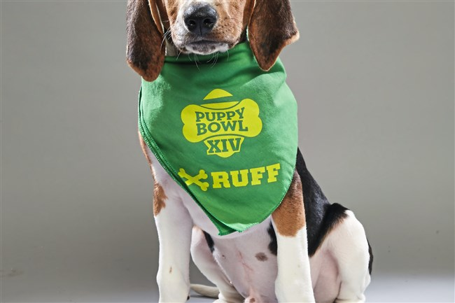 Aquaman appears in Animal Planet's Puppy Bowl on Feb. 4.