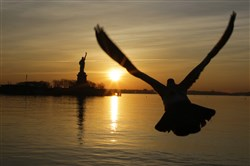 A seagull flies along the Hudson River as the Statue of Liberty is seen from Liberty State Park on January 21, 2018, in Jersey City, New Jersey.