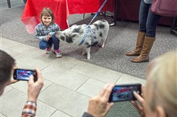 Addison Allen, 5, of Beaver Falls, poses with Nola the pig during a fundraiser at the Carnegie Boys & Girls Club.