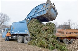 Go, Christmas tree: Wood Waste Recycling in Bridgeville receives the work of the Pine Cone Derby.