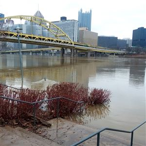 Floodwaters lap against stairs leading from North Shore Drive down to the Allegheny River around 8:45 a.m. Sunday.
