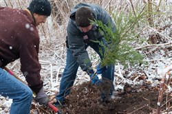 Staff and volunteers planted 200 trees at Tree Pittsburgh's campus on the North Side as part of the city's 2016 bicentennial celebrations.