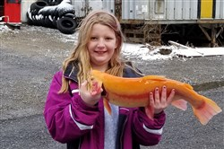 Caitlin Pegher, 11, of Allison Park landed a beautiful 22 ½-inch 5-pound golden rainbow trout at Pine Creek on April 7, Mentored Youth Fishing Day.