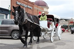 A horse-drawn carriage makes its way through The Waterfront Town Center in Homestead.