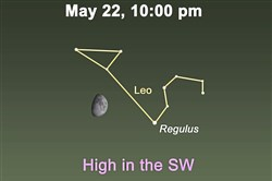 The first-quarter moon now sits about 12 degrees to the left of Regulus, Leo's brightest star.