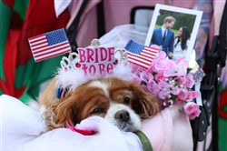 A dog sits on her owner's lap as they wait outside Windsor Castle ahead of the dress rehearsal for the wedding of Prince Harry and Meghan Markle on May 17, 2018, in Windsor, England.