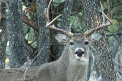 White-tailed deer have tested positive for fatal chronic wasting disease in 24 American states.