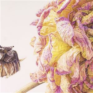"Patricia Luppino (United States), ""Discouraged Daughter, Dahlia 'Crichton Honey,'"" colored pencil on paper. It is among 41 artworks in the Hunt Institute for Botanical Documentation's 16th International Exhibition of Botanical Art & Illustration."